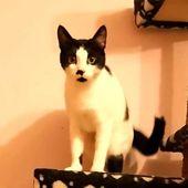 Lilo mit dem Schönheitsfleck an der Nase, ist 1 Jahr alt und nach wie vor auf de… ,  #adopt…