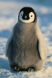 – #penguinetiere   – tierisch