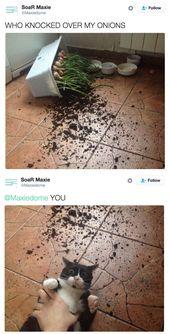 18 Beweise, dass du und dein Zeug Katzen einen Scheiß interessieren