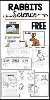 Free Rabbit Science Printables & Actions – Mrs. Thompson's Treasures