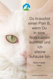 Du brauchst einen Plan B, wenn Du in eine Notsituation gerätst und Deine Katze … – Haustiere Tipps & Tricks (Wissenswertes)