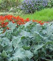8 wundervolle Tipps: Landgarten Garten Sommer Vorgarten Gemüsegarten Win …, # Gemüsegarten #he …   – Garten Fotografie