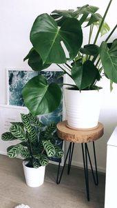 Minimale Einrichtung mit schönen Pflanzen – Wohnung