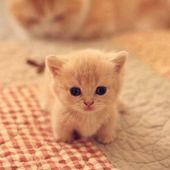36 faits incroyables et surprenants sur les chats que vous ne connaissez sans doute pas !
