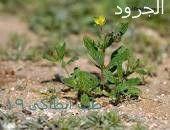 طب أنطاكى طب انطاكى حرف الالف 19 Plants
