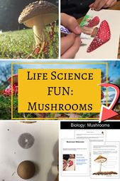 Life Science Projects: Mushrooms