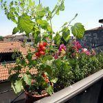 Wie man freie Nahrung in den Fensterkästen wächst: Was man u. Spitzen anbaut, um Produktion aufzuladen   – Gardening