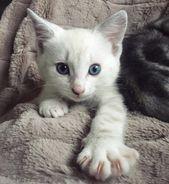 Nichts niedlicher als ein Kätzchen Gesicht! Http: //bit.ly/2SvTJ2c