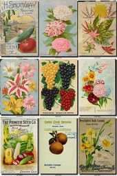 SEEDS-63 Kataloge umfasst Sammlung mit 101 Vintage-Bildern Pflaumenkorb Mais Vasen Orangenbaum in hoher Auflösung digitaler Download zum ausdrucken   – scrapbooking