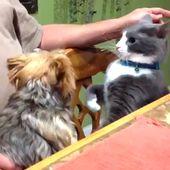 Lustige Katzen und Hunde KLICKEN SIE AUF BESUCH, UM MEHR VIDEOS ZU SEHEN   – Paws.
