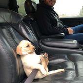 Seguridad👌😍😂 Con tu mejor amigo #dog #puppies nunca podrás …   – Happy Tiere