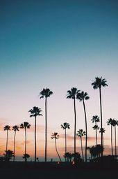 Sonnenuntergang hinter Palmen im Miami Beach   – Hintergründe