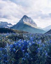 Au sommet des montagnes se terre la plus belle des fleurs | Ir abelas, vhenan