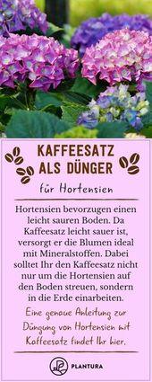 Kaffeesatz als Dünger: Nutzen & Vorteile von Hausmitteln – Plantura – Garten