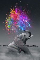 Very colorful a beautiful elephant a very great photography art makes free art lets us express what we feel so express yourself