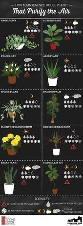 Terrace Garden INFOGRAPHIC: Easy-care indoor plants that absorb the air   – Pflanzen Dekor