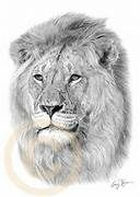 … – Pencil Drawing of Lions