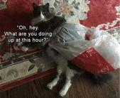 Günün komik hayvan resimleri – kaçık Picdump 6 (50 fotoğraf)