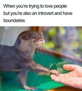 130 lustige Memes, die jeden Introvertierten zum L…