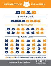 Wussten Sie, dass Kätzchen Kätzchen haben können? Kätzchen können schon ab sechs Jahren schwanger werden …