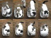 Diese Fotografien der flüssigen Katzen tropfen mit Niedlichkeit, die wir nicht anfassen können
