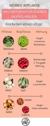 Ein Hochbeet bepflanzen: Pflanzplan, Mischkultur & Grün – kleine Balkonideen   – Kleiner Balkon