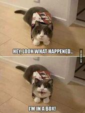 Klicken Sie auf das Foto Wenn Sie mehr lustige Katzenfotos sehen möchten #catlo …