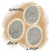 Succession Science: Are Fingerprint Patterns Inherited? 2