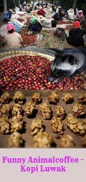 Komik Animalcoffee – Kopi Luwak – Tuhaf