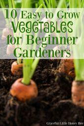 10 Leicht anzubauen Gemüse für Anfänger Gärtner