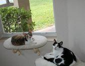 Gänseblümchen die gelockte Katze: Harley Photobomb