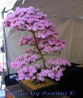 A Bonsai Cherry Tree