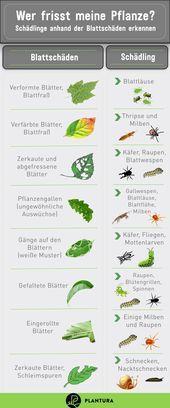 Russelkafer Erkennen Und Bekampfen In 2020 Tiere Pflanzen Garten