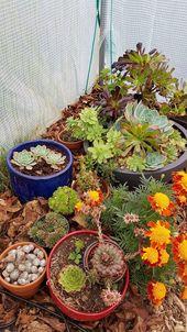 Comment conserver les succulentes et les plantes grasses en hiver