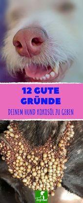 Wenn du deinem Hund täglich 1 TL Kokosöl professional 10 Kilo gibst, wird er es dir aus 12 Gründen danken.