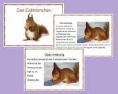 2x Das Eichhörnchen (leicht und schwer)   – Schule