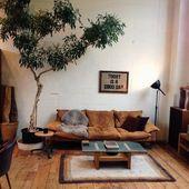 Schöne Zimmerpflanzen Bilder – so können Sie Ihre Wohnung dekorieren