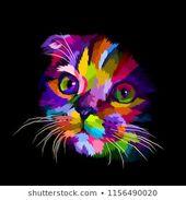 la cabeza del gato Scottish Fold es colorida en la oscuridad