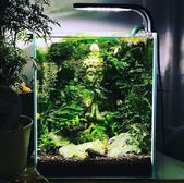 35 moderne Mini-Aquarium-Designs für Ihre kleinen…