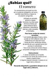 """La mayoría le llaman """"el té de Dios"""" ya que cura la tiroides, lupus, vért…"""