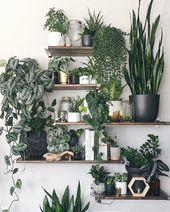 10 fantastische Pflanzenregale