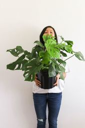 How to Take Care of Houseplants + Their Benefits – Useful Tips & Tricks