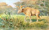 Aquí hay un perfil en profundidad de Sivatherium, incluido el c …   – Mammals