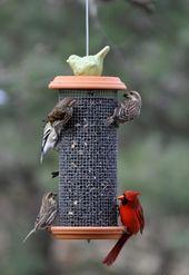 Bird Feeder le da a su jardín un aspecto más divertido   – du & dein garten