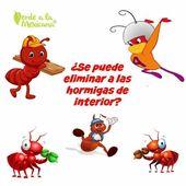 Como Acabar Con Las Hormigas Pin En Hogar Limpieza Y Mas