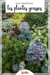 Succulentes : tout savoir sur les plantes grasses et leur entretien