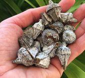 Photo of 20 geschlossene Eukalyptus-Samenkapseln, Eukalyptus-Samenkapseln, Weihnachtsdekorationen, getrocknete Hülsen, rustikale natürliche