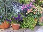 Image result for container gardening ideas uk