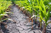 La tecnología avanzada de mejoramiento de plantas CRISPR/Cas desarrolla semilla…