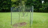 Bauen Sie einen einfachen Zaun, um Obstbäume vor Rehen zu schützen – Hobbyfarmen – Garden